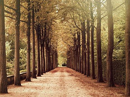 autumn_alley_by_vanerich-d5g5g0r