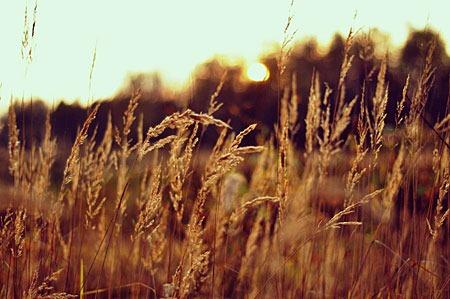 autumn_by_apolinariya-d5hwhek
