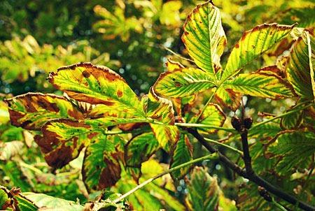 autumn_by_iliketobeweird-d5hffgq