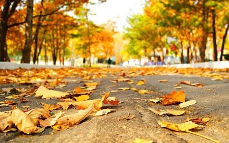 autumn_by_leya06-d5hgnuc