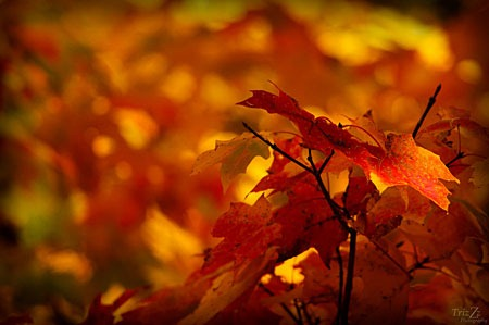 autumn_by_trizzz01-d5hm07q