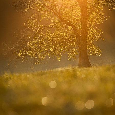 autumn_dream____by_martac-d5hvxro