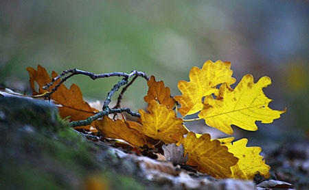 autumn_in_the_forest_by_svitakovaeva-d5h2itd