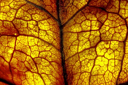 autumn_leaf_by_yortje-d5hvxty