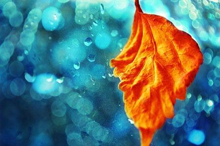 autumn_rain_by_bleeding_magic-d5gz7sx