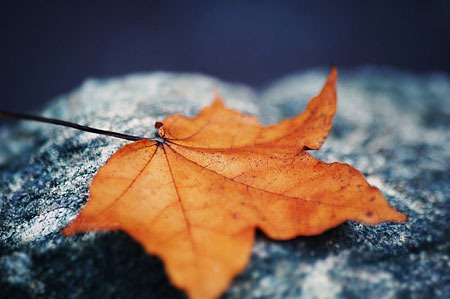 beginning_of_autumn_by_all17-d5fgqew