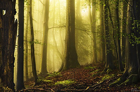 early_autumn_by_aliruo-d5gfua9