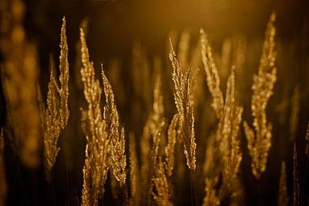 golden_autumn_by_zi0oto-d5hp3hl