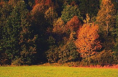 welcome_autumn_by_niwet-d5i08fr